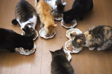ネコ用おやつ『CIAOちゅ~る』は美味しいだけじゃなく、元気がないときにも役に立った話