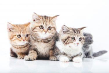 【ペット保険】ネコを飼うときにしてあげたい3つのこと